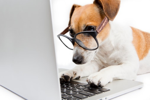 Dog with computer researching testimonials